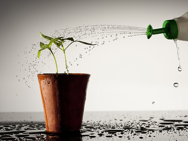 Droplets of water being sprinkled onto a seedling.